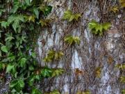 Stick wall