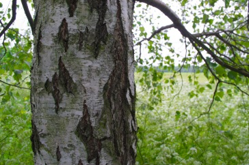 Tree left close up