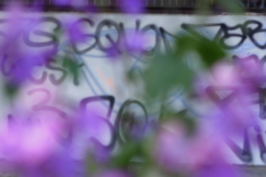 Flower Graff
