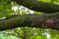 Rotten tree 6