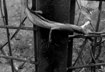 stick gate 2 (black and white)