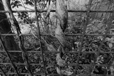 stick gate (black and white)
