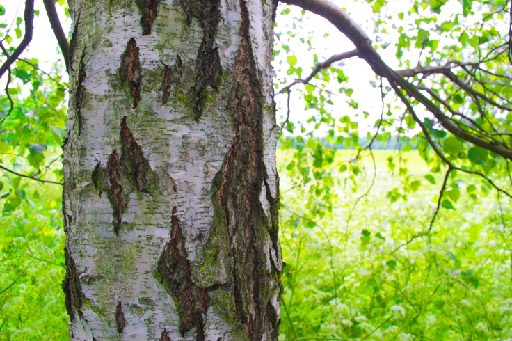 Tree left close up 5