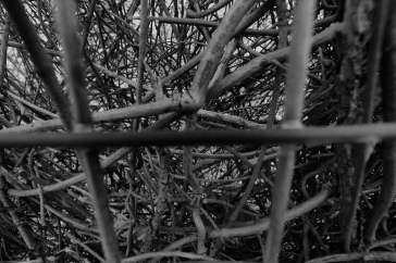Web (black n white)